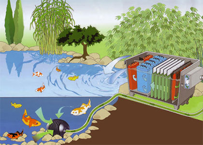 Filter for a pond: what to buy and why?