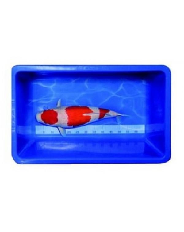 Koi Meettank kunststof 115х52х25 cm - вимірювальна ємність для кої